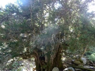 bola del mundo navacerrada viaje de fin de semana parque natural del monasterio de piedra senderismo